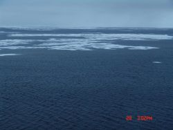 Open water and first-year ice floes. Photo