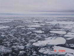 Brash ice and first-year ice floes Photo