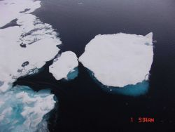 A floe of multi-year ice along the edge of the pack ice. Photo