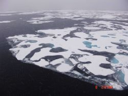 Frazil ice giving gritty appearance to water surface with floes coming together as melt pools refreeze. Photo