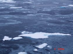 Ice floe becoming locked in place as nilas and gray ice form. Photo