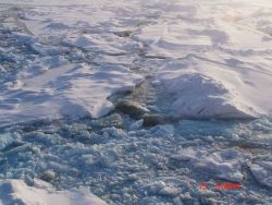 Brash ice and ice floes freezing together Photo