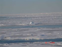 Floes of hummocky multi-year ice with refrozen melt pools and nilas ice in intervening formerly open water. Photo