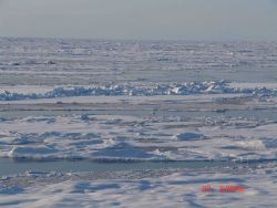 Floes of multi-year ice Photo