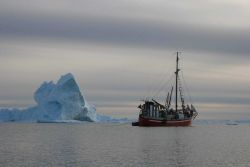MV Sila in the ice on an expedition to the narwhal summering grounds in Melville Bay, West Greenland Photo