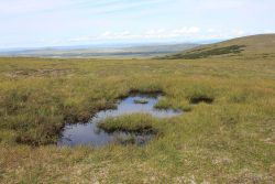 A melt pond on high tundra above the Imuruk Basin. Image