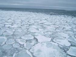 A field of pancake ice. Image