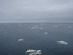 On the edge of the ice as small bergie bits are seen spread sporadically throughout the sea. Photo