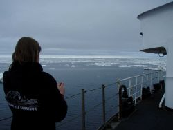A Bering Sea survivor is observing the MILLER FREEMAN approaching denser pack ice. Image