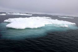 Melting pack ice. Photo