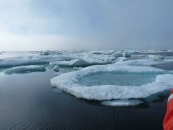 Ice floes Photo