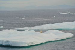 Ice floe with polar bear in Beaufort Sea. Photo