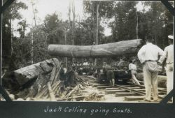 A huge log being placed on a railroad car at Batottan, British North Borneo. Image
