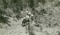 On the trail to Station Mogollon on the Mogollon Rim, a 25-mile horse pack. Photo