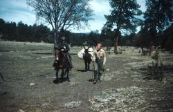 Brown horse and mule packing to a station somewhere in New Mexico Photo