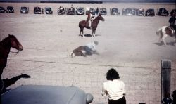 A rodeo at Willcox Photo