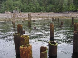 Numerous offshore pilings mark a collapsed pier at a deserted cannery. Photo