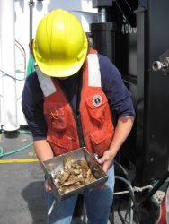 Inspecting bottom grab sample obtained during bottom sampling operations on ship. Photo