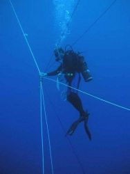 Marine scientist spiderman Misha Matz coordinates a blue water dive for 4 companions - each at the end of a rope tether and each rope kept taut by a w Photo