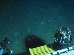 Dive at Wreckfish Cave. Photo