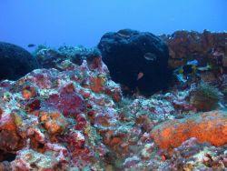 A black sponge dominates this reef scene. Photo