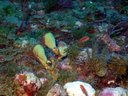 Numerous types of algae visible in this image Photo
