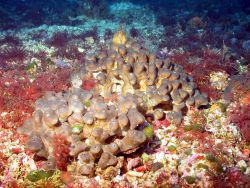 Lumpy appearing brown sponge. Photo