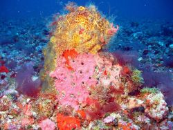Yellow and red sponge with red algae around base Photo