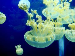 Jellyfish - explore an aquarium to see some of the wonders of the sea. Photo