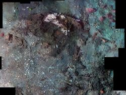 Photomosaic of Madrepora reef with surrounding clamshell debris (below and left) and Paramuricea gorgonians (soft corals) on the periphery Photo