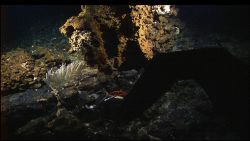 The manipulator arm of the Hercules ROV sampling a rock in an area of iron-stained hydrothermal alteration on the Atlantis Massif. Photo
