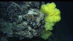A cliff face covered with in many different types of sponges. Photo