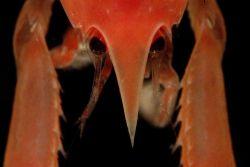 Photograph taken through microscope. Photo