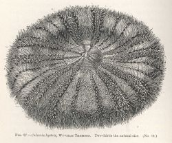 Figure 27 Photo