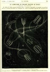 Ctenophores observed at the Naples Zoological Station as illustrated in La Nature. Photo