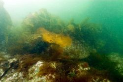 An iron plate from the HASSLER's bow embedded in the rock pinnacle that sank the ship in 1898. Photo