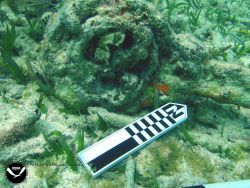 Debris associated with the wreck of the Ship THIORVA Photo