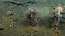 Artifact from Monterrey C shipwreck Photo