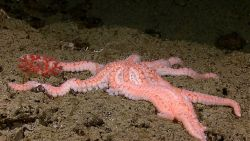 A stunning 10-armed sea star Image