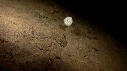 A large white sponge Image