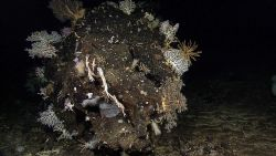 A boulder covered with corals, sponges, a few crinoids, a squat lobster or two, a few sea anemones, and even small tube worms. Photo