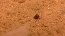 A shiny bean-like object on the sea floor. Image