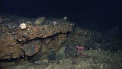 At least two species of fish, large shrimp, a small spiraling coral,and white sea anemones using iron oxide stained rock outcrop for habitat. Image