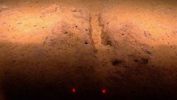 A small trench, perhaps caused by a whale foraging along bottom, with a red shrimp. Image