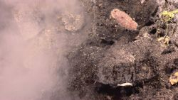 A nearby hydrothermal vent, a scale worm, shrimp, and precipitates of native sulfur at a vent field on Kawio Barat. Photo