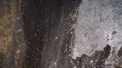 Bacterial mat covering sediments in vicinity of hydrothermal vents. Photo