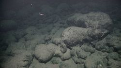 Shrimp swimming above pillow lavas in areas of murky water indicating possible proximity to hydrothermal venting Photo