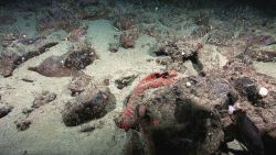 A red encrusting sponge? or a red blanket that has drifted down from the surface ? The field identification for this image was labeled sweater_sponge Image