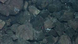 Angular blocks of lava rock and vent crabs are seen through shimmering water indicating venting hydrothermal fluids. Image