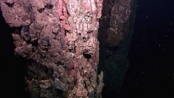 A field of extinct sulfide chimneys, several meters high, rise above the surrounding seafloor Image